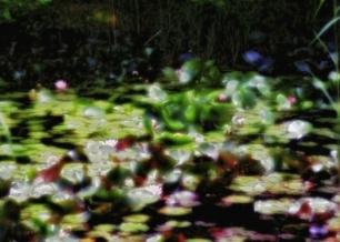 Exposition Natures Singulières